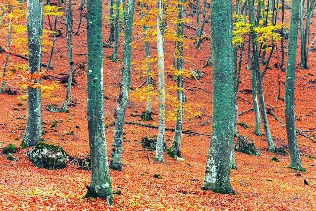 Bela floresta de outono no parque com árvores amarelas e vermelhas