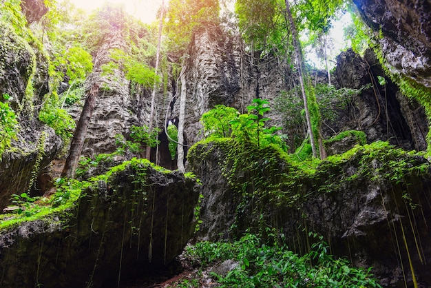 Bela floresta de videiras