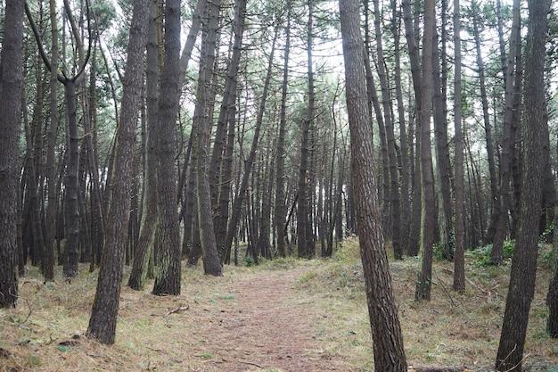 Bela floresta densa com muitas árvores altas