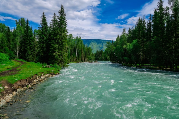 Bela floresta e rio