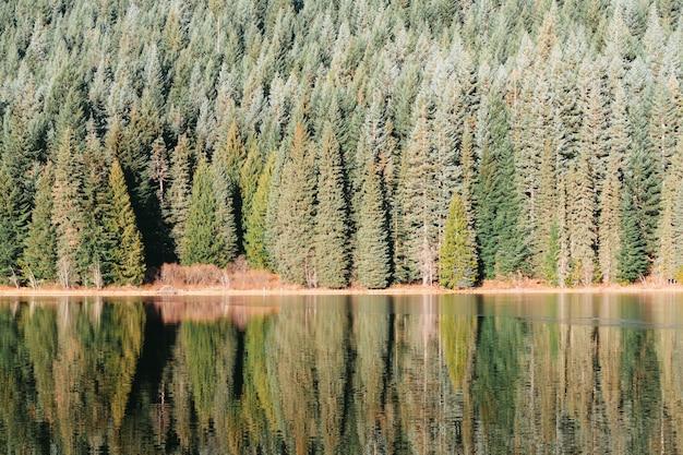 Bela floresta na margem do lago com as árvores refletidas na água