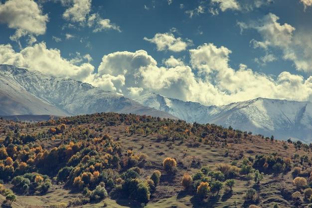Bela floresta na montanha sob o fundo do céu