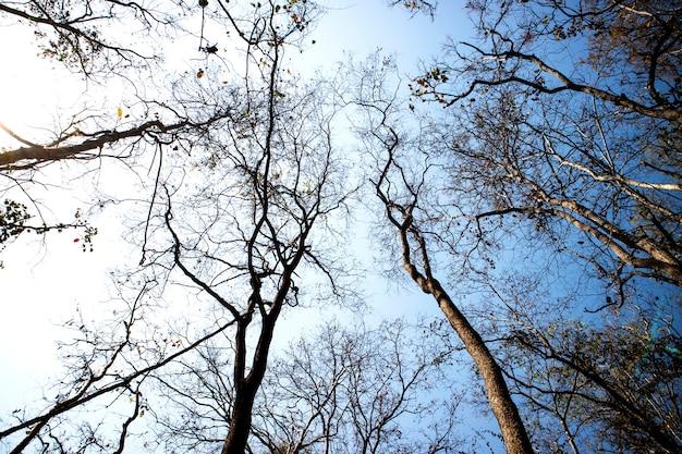 Bela floresta verde com céu azul.