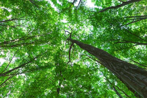 Bela floresta verde no verão