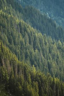 Bela floresta verde nos alpes de chamonix, na frança