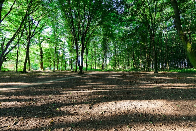 Bela floresta verde