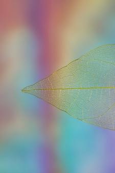Bela folha de outono transparente vívida