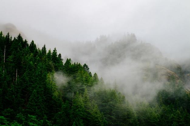 Bela foto aérea de uma floresta envolvida em névoa assustadora e nevoeiro