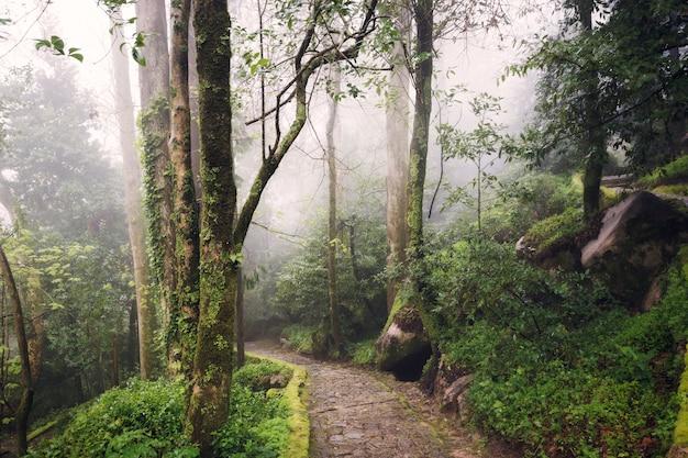 Bela foto ao nível dos olhos de um caminho em uma floresta verde