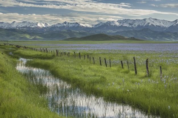 Bela foto da água no meio de campos gramados com flores cor de rosa e uma cerca