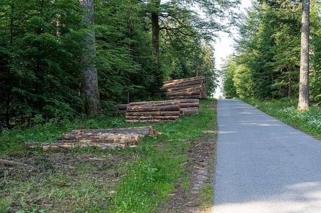 Bela foto da floresta negra, alemanha