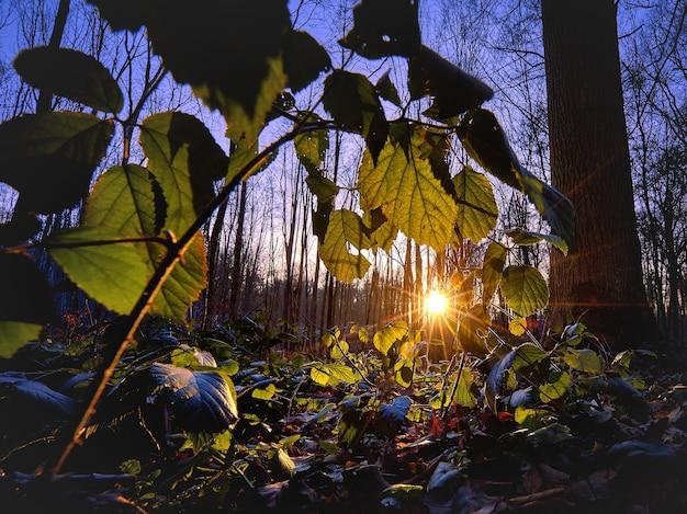 Bela foto da luz do sol brilhando na floresta