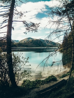 Bela foto da paisagem do lago e floresta com vegetação