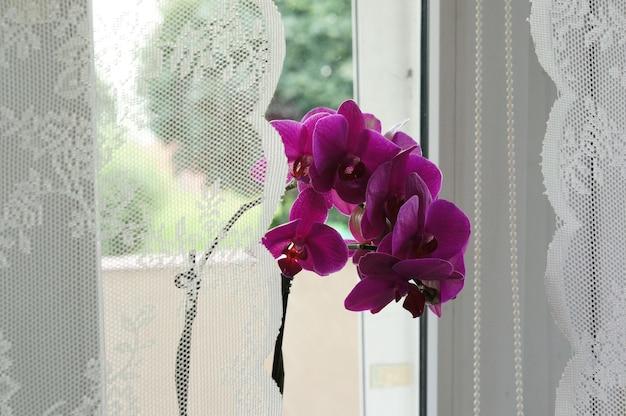 Bela foto das flores roxas da planta perto da janela com cortinas brancas