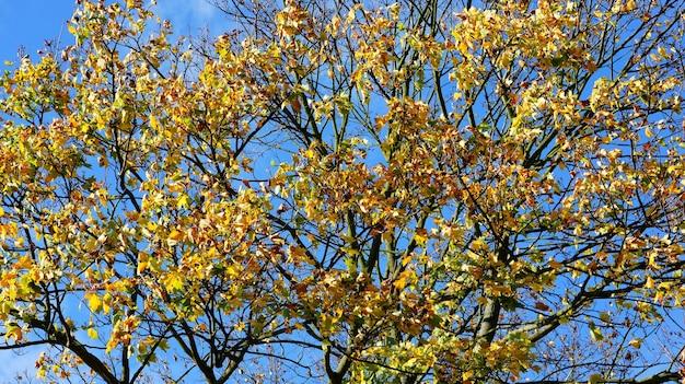 Bela foto das folhas coloridas nos galhos de uma árvore