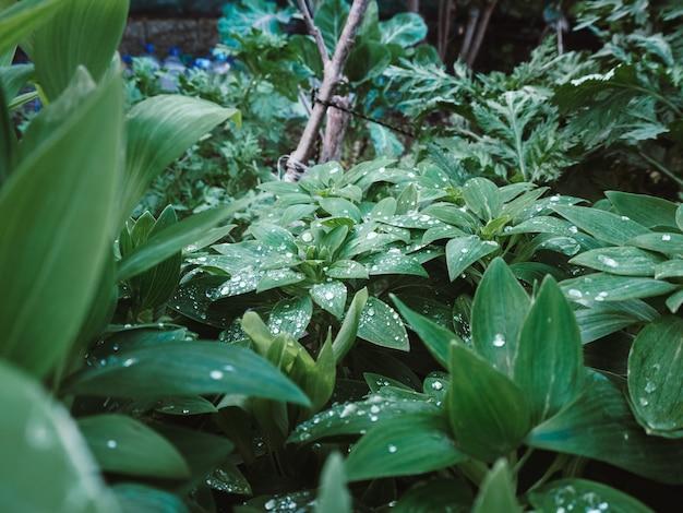 Bela foto das plantas verdes com gotas de água nas folhas no jardim