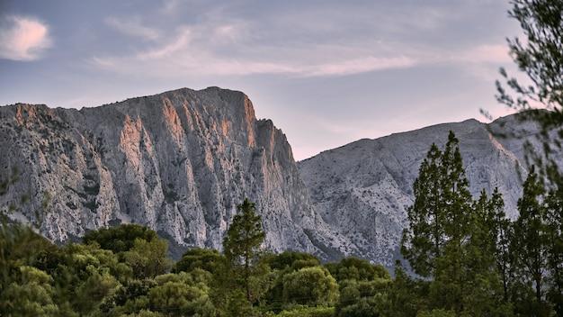 Bela foto de árvores com montanhas e um céu azul no