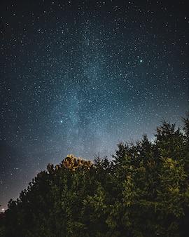 Bela foto de baixo ângulo de uma floresta e o céu cheio de começos