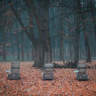 Bela foto de cadeiras de madeira em uma floresta assustadora