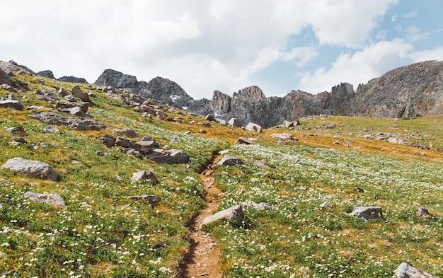 Bela foto de caminho estreito no meio de campos gramados com flores