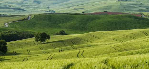 Bela foto de campos verdes com estradas estreitas no meio