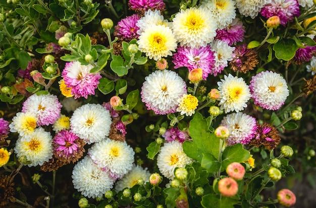 Bela foto de cima em um canteiro de flores colorido no parque