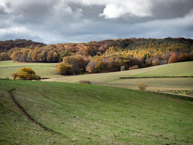 Bela foto de colinas gramadas com uma floresta à distância sob um céu nublado