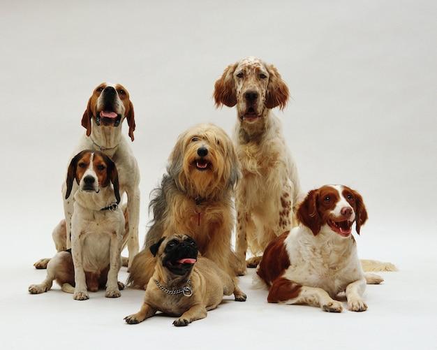 Bela foto de diferentes raças de cães posando