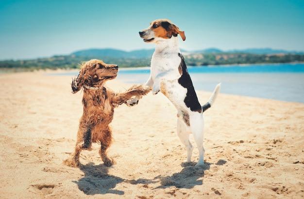 Bela foto de dois cachorros em pé e dançando juntos em uma praia