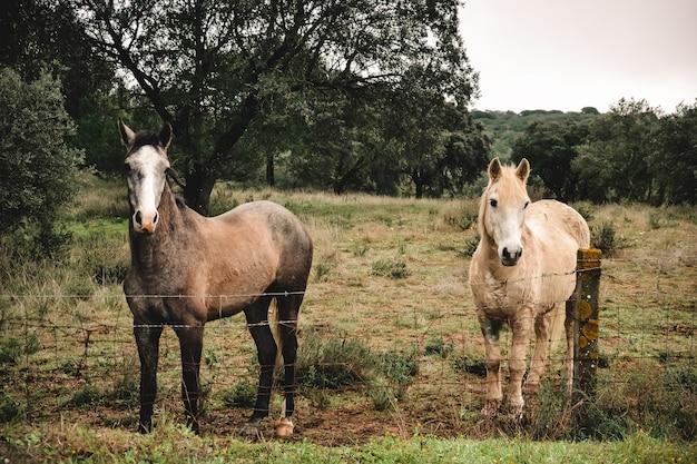 Bela foto de dois cavalos atrás de uma cerca com árvores