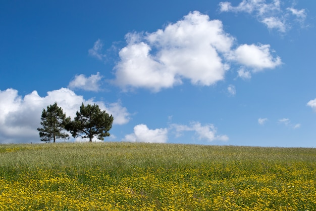 Bela foto de duas árvores que crescem em um greenfield