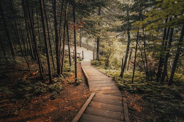 Bela foto de escadas de madeira, rodeadas por árvores em uma floresta