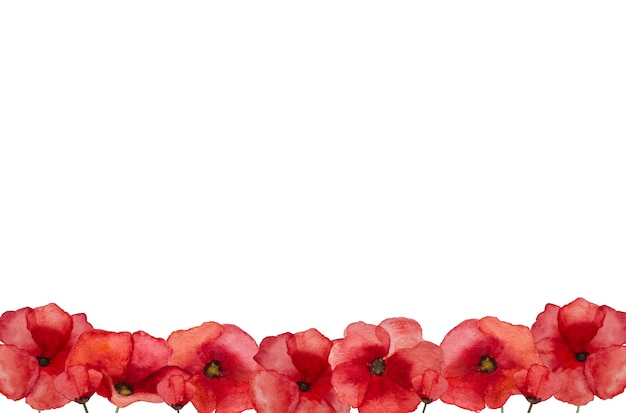 Bela foto de flores de papoula. feliz dia da lembrança