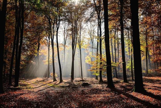 Bela foto de floresta com árvores com folhas verdes e amarelas e o sol brilhando por entre os galhos