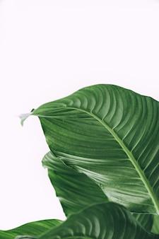 Bela foto de folhas tropicais exóticas