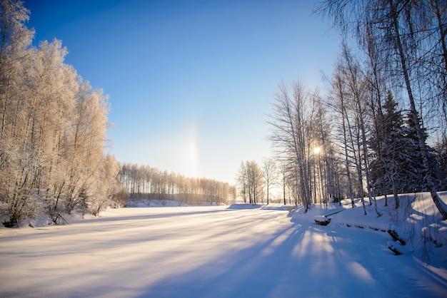 Bela foto de inverno com árvores cobertas de neve em clima ensolarado para cartões de natal com céu azul