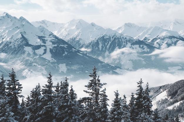 Bela foto de montanhas e árvores cobertas de neve e neblina