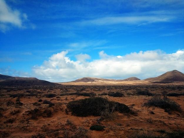 Bela foto de terras áridas e arbustos no parque natural de corralejo, espanha