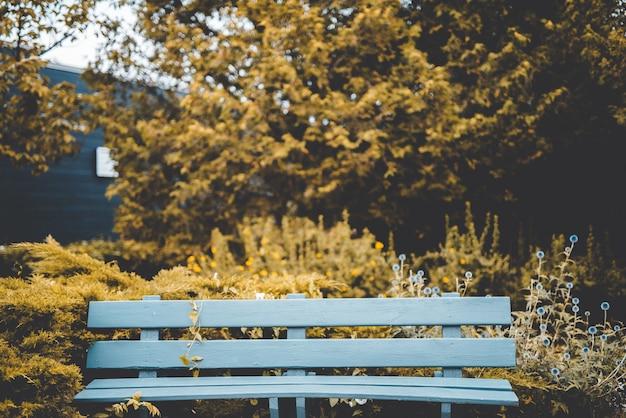 Bela foto de um banco perto de plantas de folhas amarelas