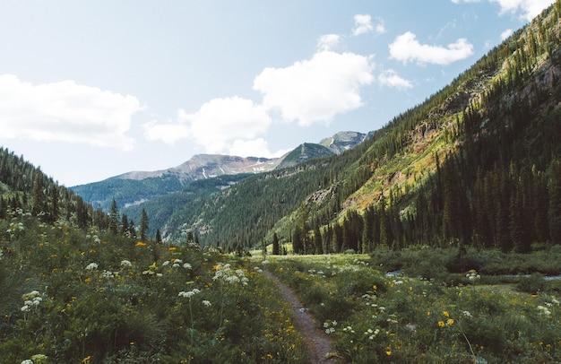 Bela foto de um caminho estreito no meio de um campo gramado com árvores e flores