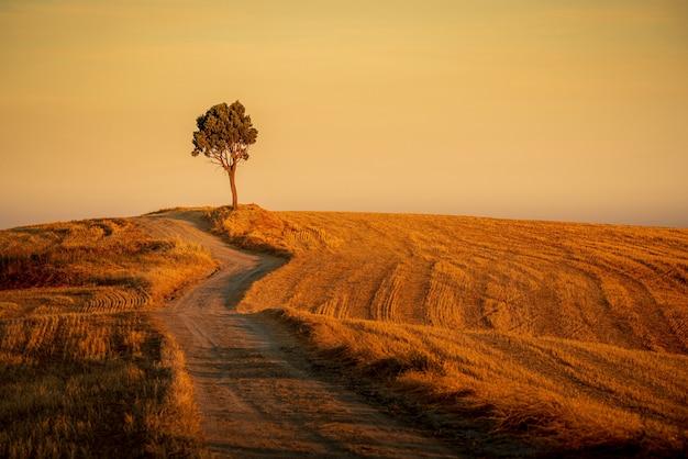 Bela foto de um caminho nas colinas e uma árvore isolada sob o céu amarelo