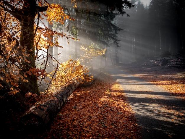 Bela foto de um caminho no meio da floresta com o sol brilhando através dos galhos
