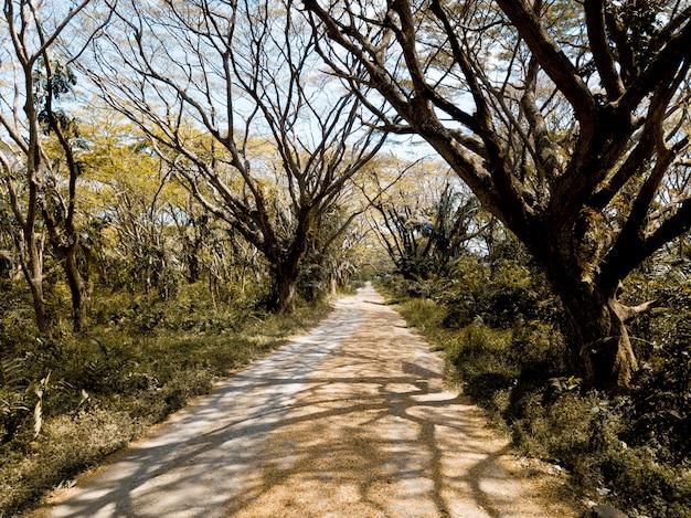 Bela foto de um caminho vazio no meio de árvores sem folhas e plantas verdes
