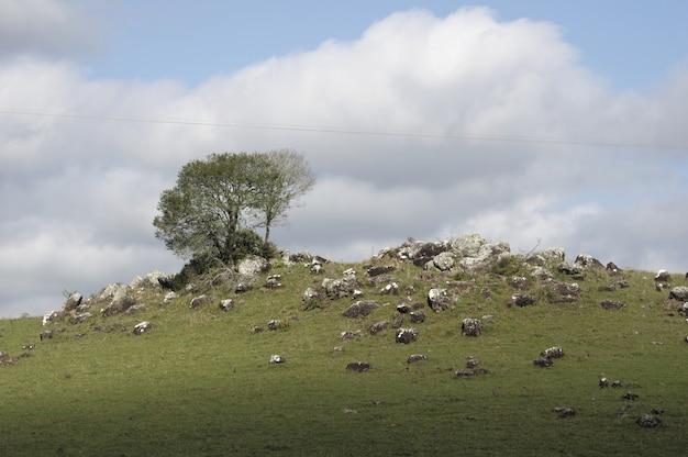 Bela foto de um campo cheio de rochas de diferentes formas e tamanhos e algumas árvores