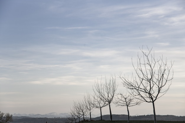 Bela foto de um campo com árvores nuas em uma linha durante o início da primavera