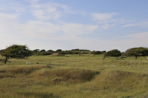 Bela foto de um campo em rubjerg, lonstrup durante o dia