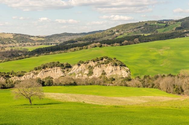 Bela foto de um campo gramado com uma árvore e uma montanha à distância