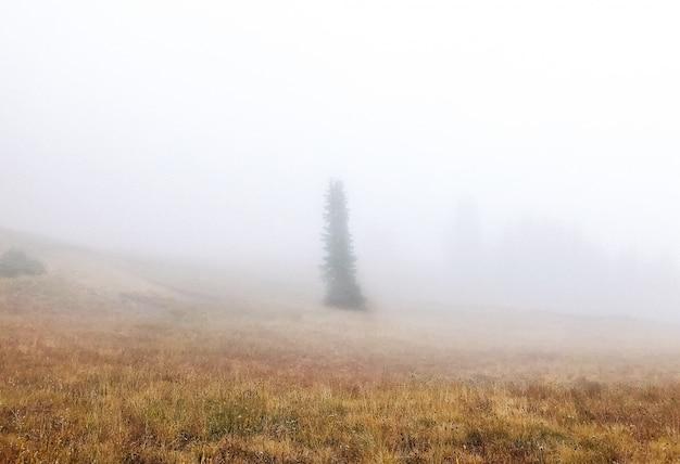 Bela foto de um campo gramado seco com uma árvore no meio do nevoeiro