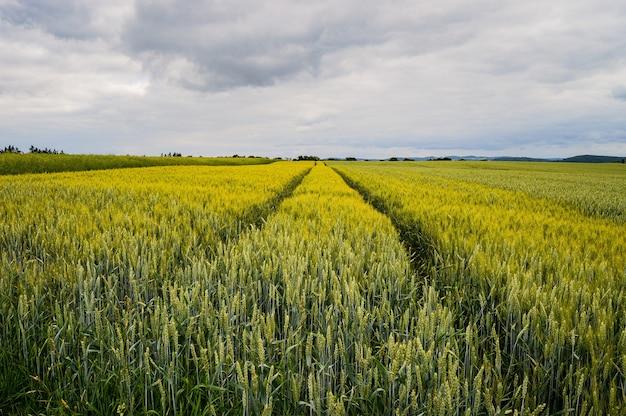 Bela foto de um campo perto da estrada na alemanha