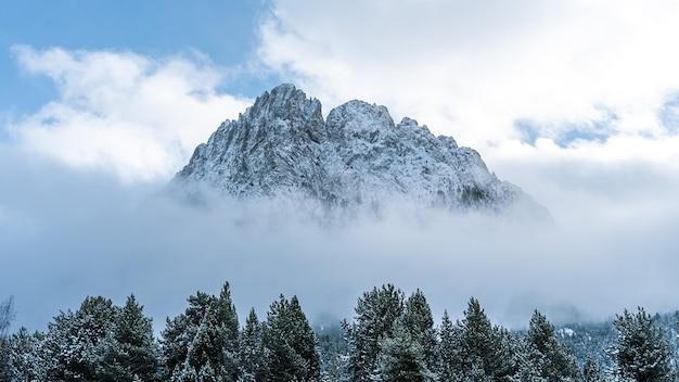Bela foto de um dia enevoado em uma floresta de inverno perto de uma montanha